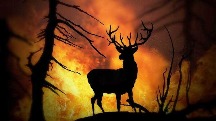 forest fire with buck